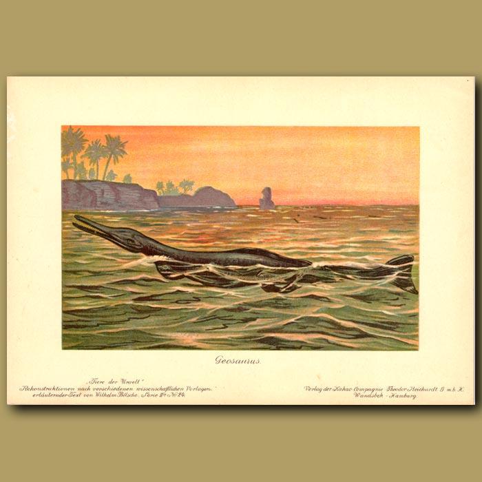 Antique print. Geosaurus