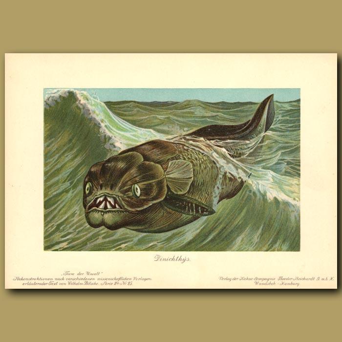 Antique print. Terrible Fish