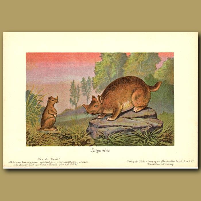 Antique print. Prehistoric Horned Gopher