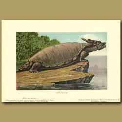 Prehistoric Turtle