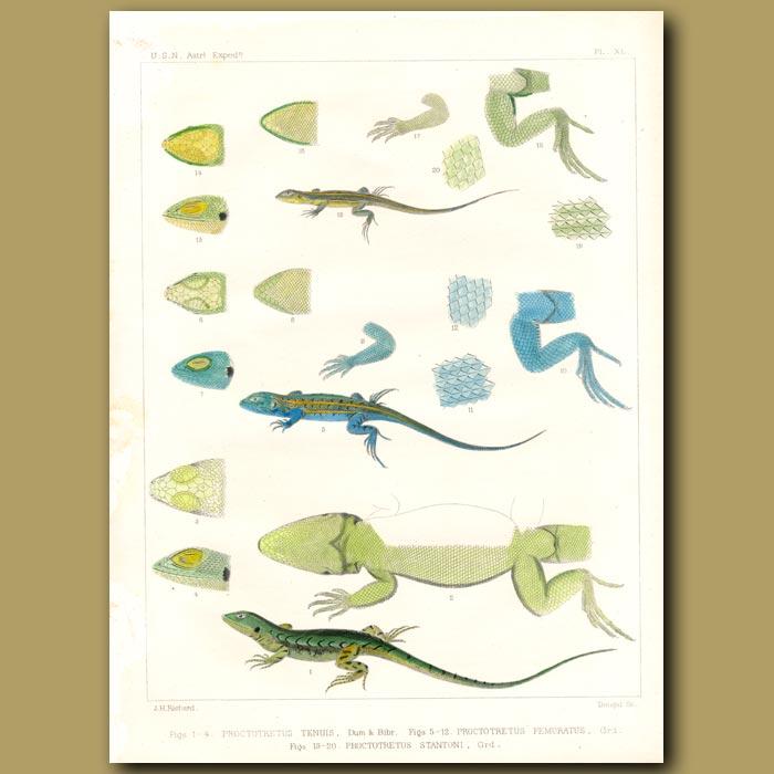 Antique print. Lizards