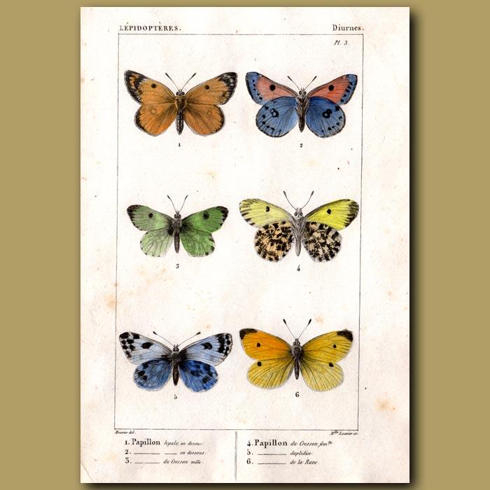 Antique print. Colourful Garden Butterflies