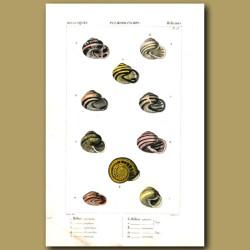 Helix Shells