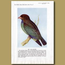 The Dollar-Bird