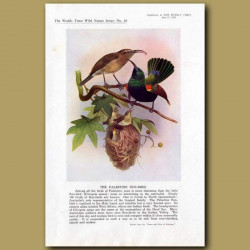 The Palestine Sun-Bird