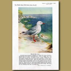 The Silver Gull