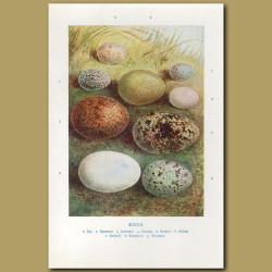 Eggs – Jay, Sparrow, Jackdaw