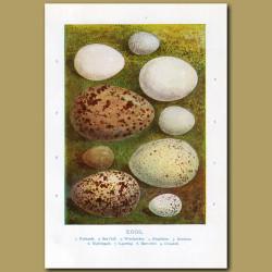 Eggs - Nuthatch, Sea Gull, Woodpecker