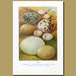 Eggs – Carrion Crow, Swallow, Sparrow-hawk, Blue Tit