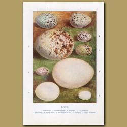 Eggs – Ring Ouzel, Kentich Plover, Buzzard
