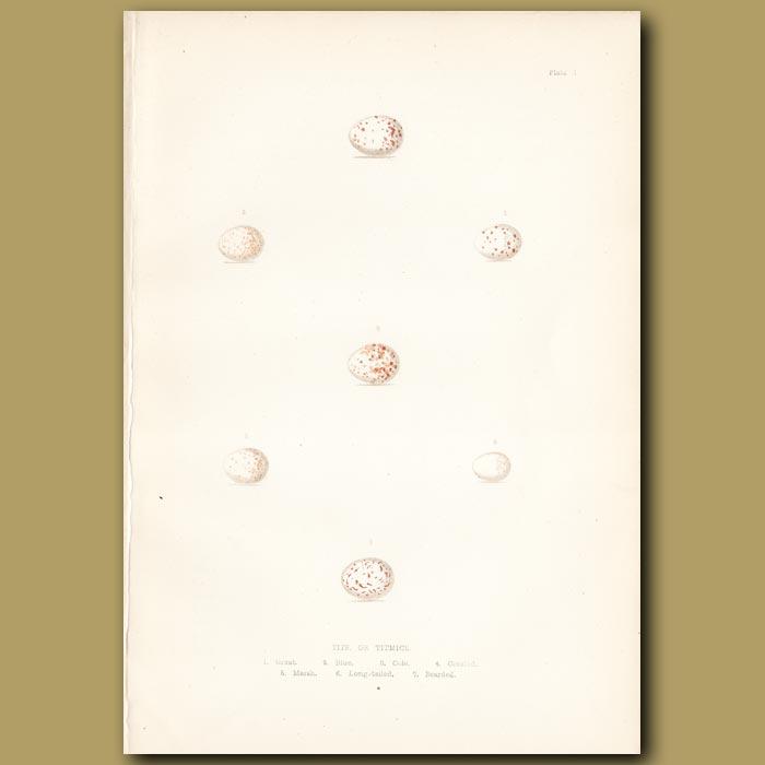 Antique print. Tits or Titmice eggs