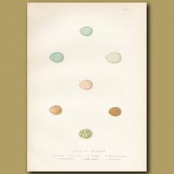 Chat And Warbler Eggs