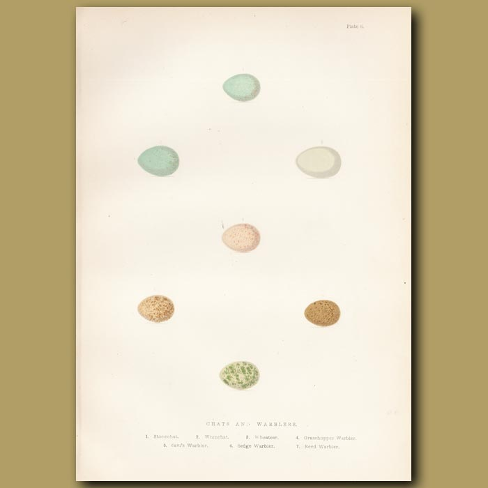 Antique print. Chat and Warbler eggs