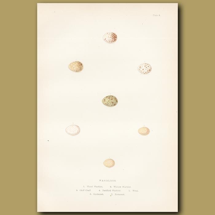 Antique print. Warbler eggs
