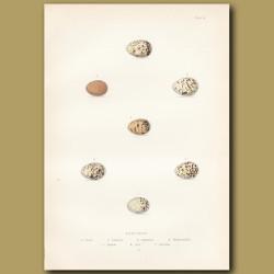 Bunting Eggs