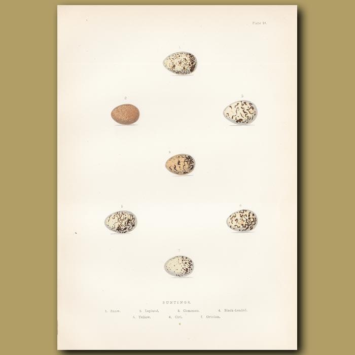Antique print. Bunting eggs