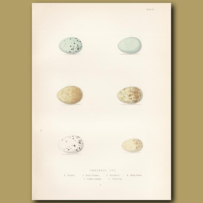 Antique print. Thrush eggs