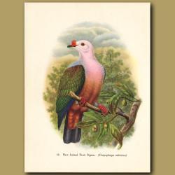 New Ireland Fruit Pigeon (Papua New Guinea)