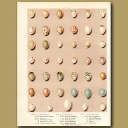 Bird Eggs - Whitethroat, Blackcap,Warbler,Chiffchaff,Great Tit