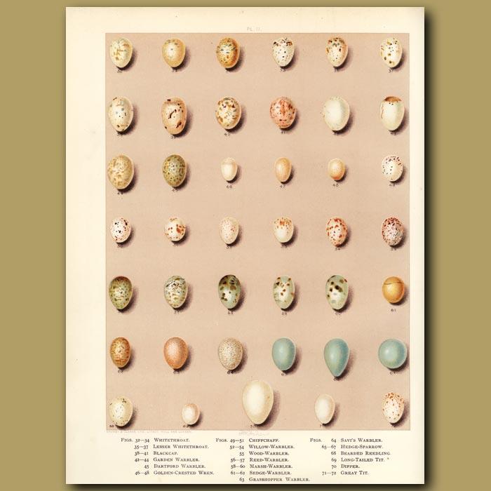 Antique print. Bird eggs - Whitethroat, Blackcap,Warbler,Chiffchaff,Great Tit