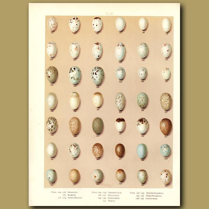 Antique print. Bird eggs  Coal Tit,Blue Tit, Nuthatch,Wren, Wagtail,Tree Pipit, Shrike