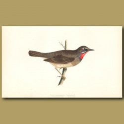 Ruby-Throated Warbler