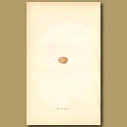 River Warbler Egg