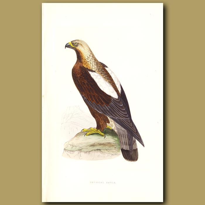Antique print. Imperial Eagle