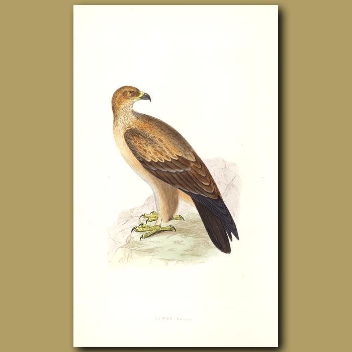 Antique print. Tawny Eagle