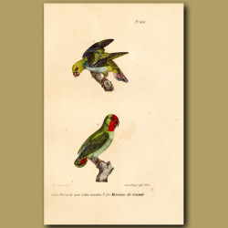 Variegated Parrakeet And Red-Headed Parrakeet From Guinea