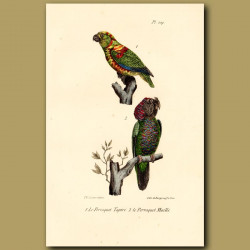 Harlequin Parrot And Stitch Parrots
