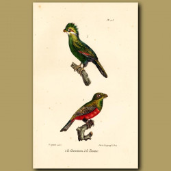 Blue-Crowned Trogon And Touraco