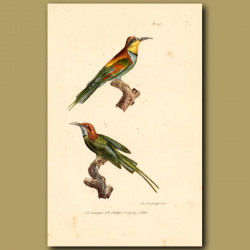 European Bee-Eater And Blue-Throated Bee-Eater