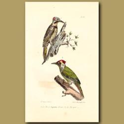 Golden Woodpecker And Green Woodpecker