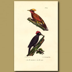 Yellow-Crested Woodpecker And Black Woodpecker