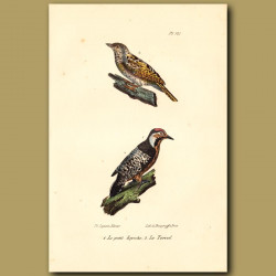 Eurasian Wryneck And Great Spotted Woodpecker