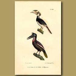 Hornbill And Great Hornbill