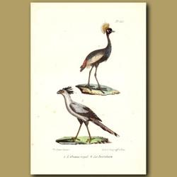 Crowned Crane And Secretary Bird