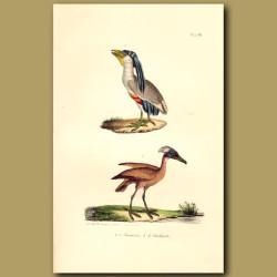 Boat-Billed Heron And Hamerkop