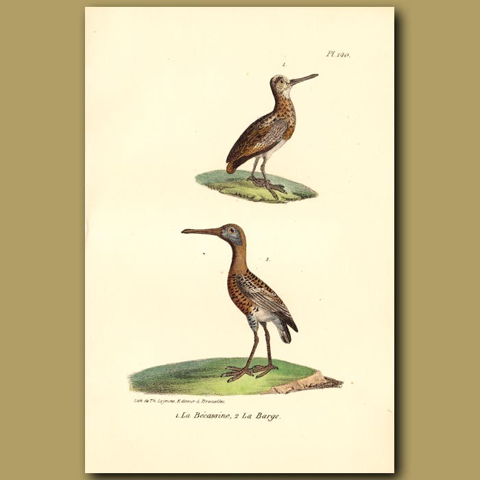 Antique print. Snipe and Red Barge