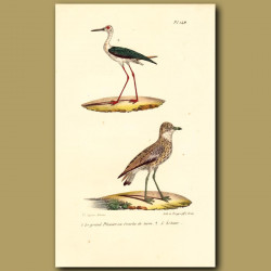 Great Plover And Long-Legged Plover
