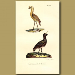 Crested Cariama And Southern Screamer