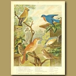 Cedardbird, Tufted Titmouse, Phoebe, Brown Thrasher, Bluebird And Song Sparrow
