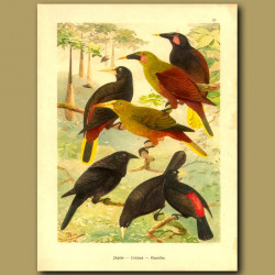 Colourful New World Perching Birds