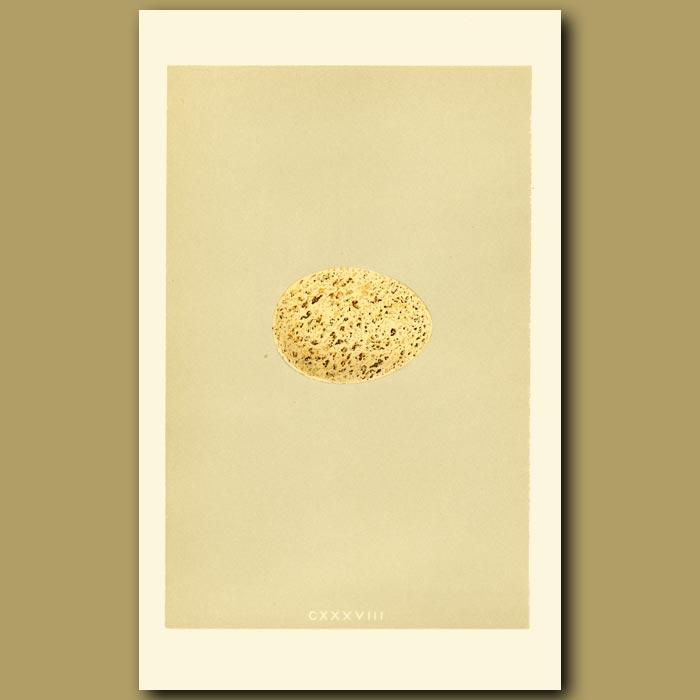 Antique print. Capercaillie Egg