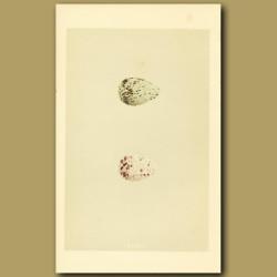 Green Sandpiper And Wood Sandpiper Eggs