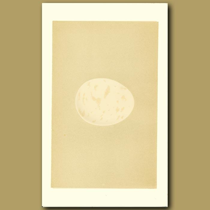 Antique print. Erne Egg