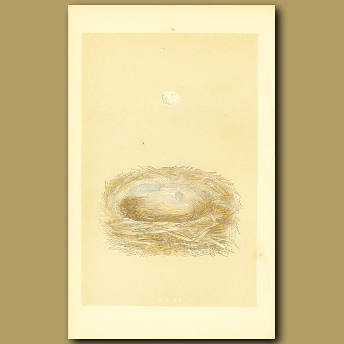 Antique print. Cole Tit Nest And Egg