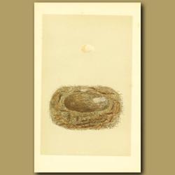 Spotted Flycatcher Nest And Egg