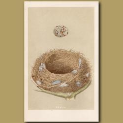 Missel Thrush Nest